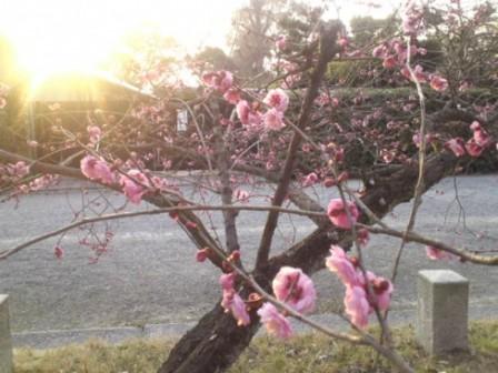 春ストール♪